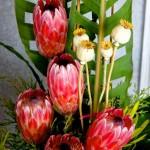 FloralArt038_zpsda11f62e