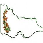 VFAA-logo